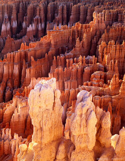 Bryce Canyon hoodoos glow in morning light in Bryce Canyon National Park, Utah.