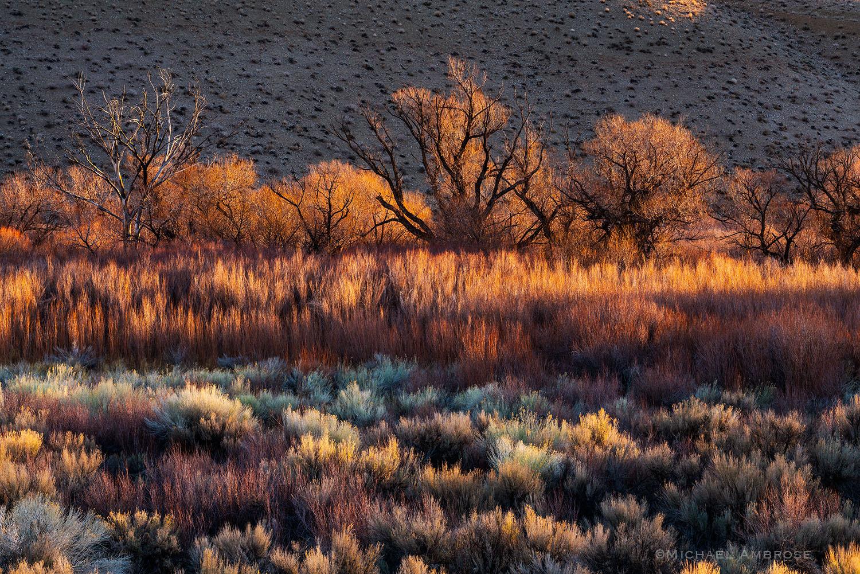 backlight, sagebrush, owens valley, California, eastern Sierra, California desert, desert photography, eastern Sierra photography...