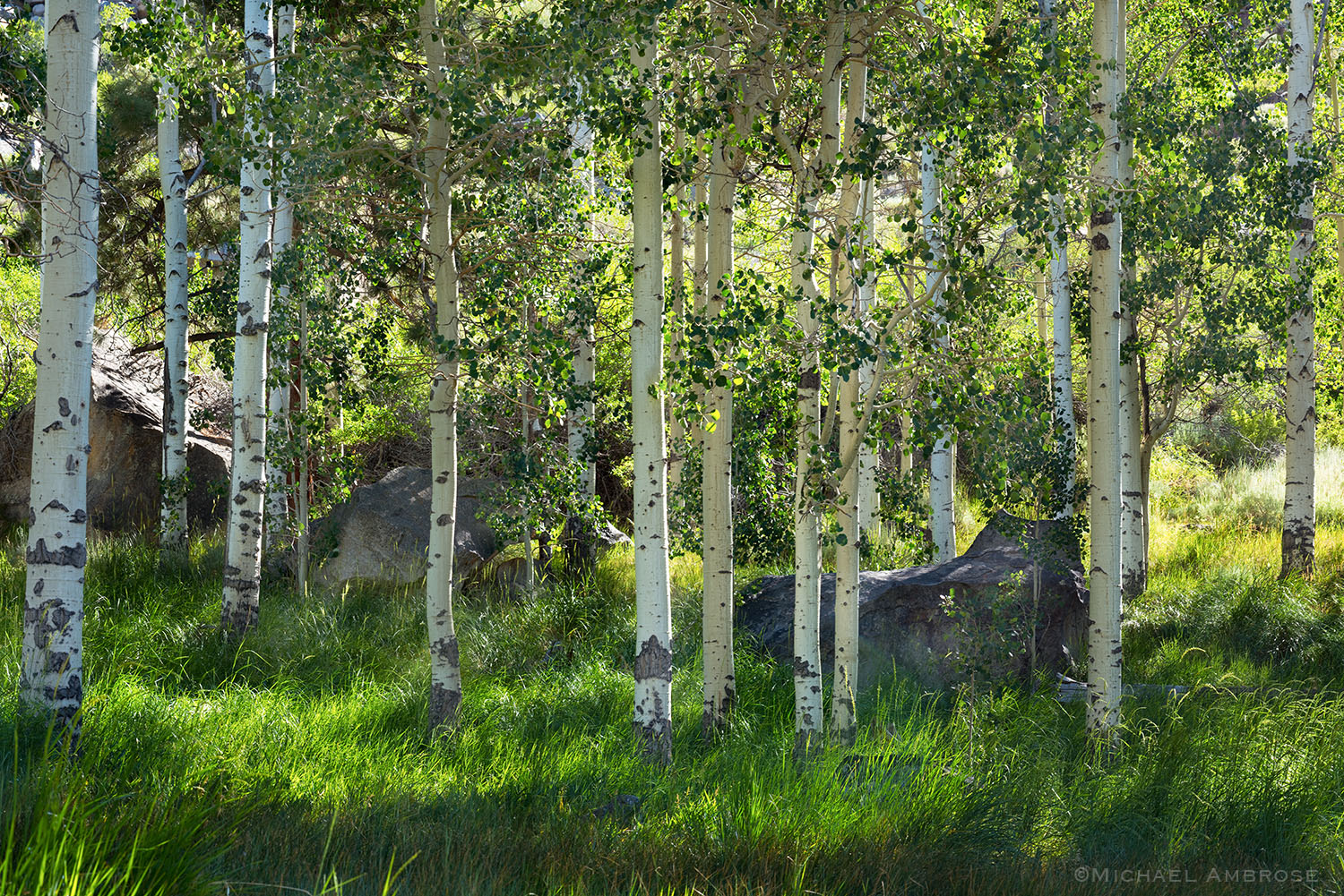 Springtime in the Eastern Sierra can be lush and green like this scene in the Mono Basin.